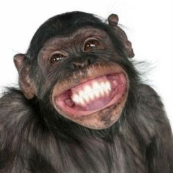 b9aa5a9057fa0d1fac6b64b93d8d4551-monkey-business-happy-weekend